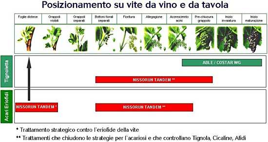 Posizionamento Nissorun Tandem su vite da vino e da tavola