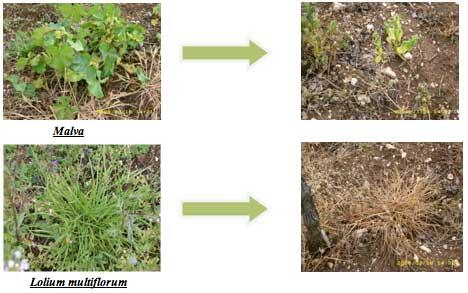 Chikara su erbe difficili